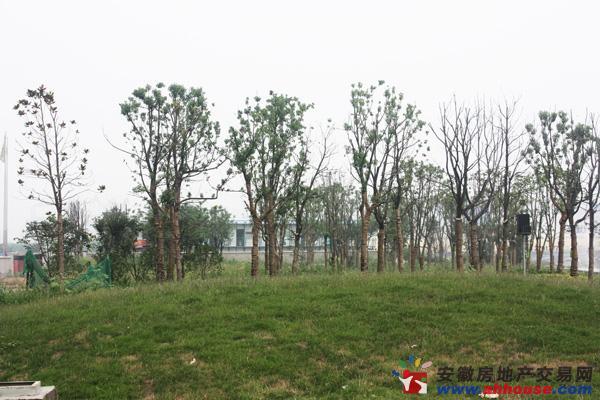 明珠广场·凤凰城周边环境图
