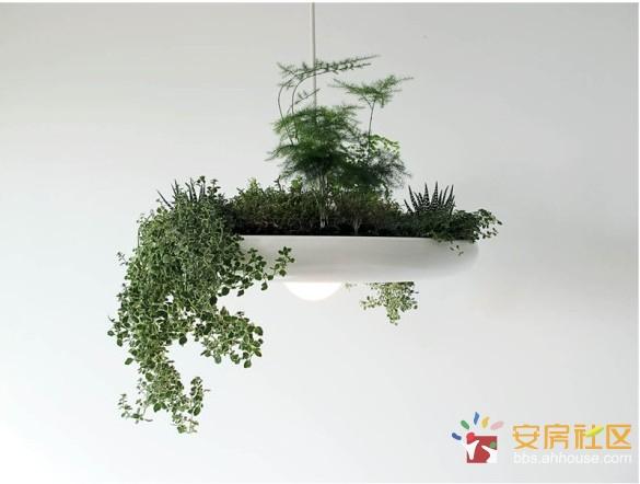 Light 巴比伦灯 传说中的空中花园