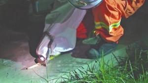 洛阳一幼儿园现1米长花蛇 消防员抓捕后野外放生